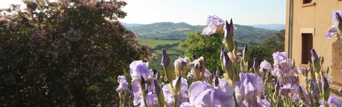 les-iris-la-source-doree-e1461327973821