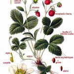 ferme-permacole-fragaria